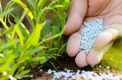 Hnojení dusičnany